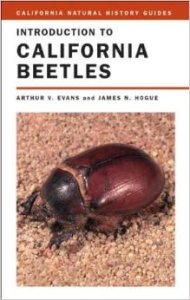 ca_beetles